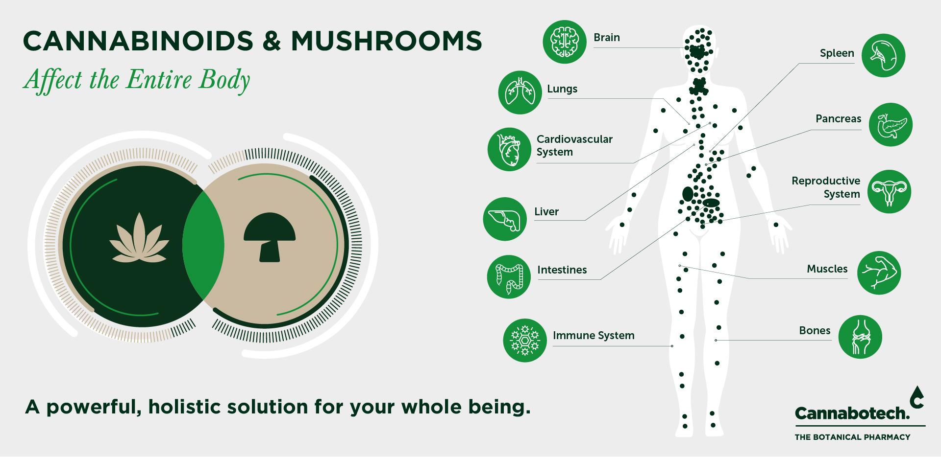 mushrooms and CBD infographic bodily systems icons