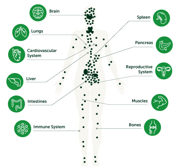 OUR BODY'S ENDOCANNABINOID SYSTEM